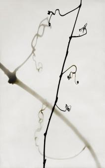 Shadowgraph, Vines #1