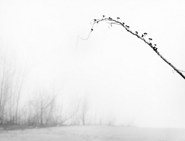 On the Batture: February Branch