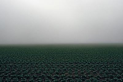 James Cooper: Lettuce Field, from the series Agriculture