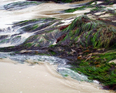 Helen Schwartz: Seaweed, Point Dume Natural Preserve, Malibu, California