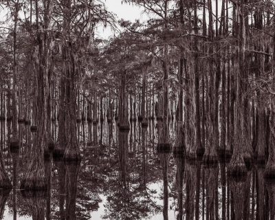 Timothy H. McCoy: Swamp Fever (Parrish Pond, George L. Smith State Park, GA)