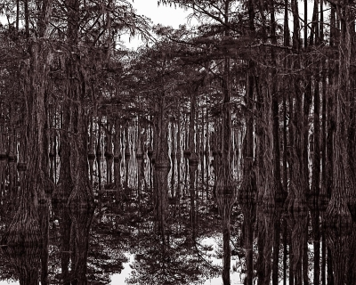 Timothy H. McCoy: Swamp Fever