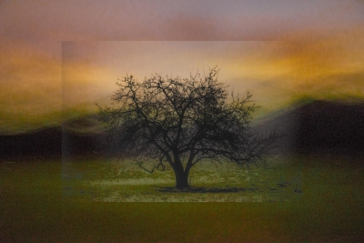 Christopher Kennedy: Firefly Tree, from The Trees Revered series