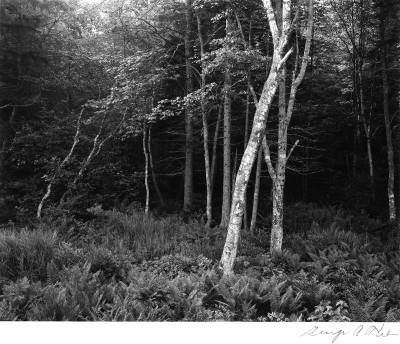 George Tice: Woods, Port Clyde, Maine