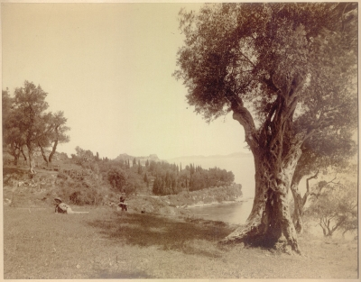 Unknown: Olive Grove with Boys (Corfu)