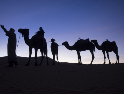 David H. Wells: Camels at Sunset in the Sahara in Morocco