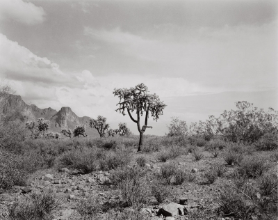 Paula Chamlee: Superstition Mountains, Arizona, with a copy of Natural Connections: Photographs by Paula Chamlee