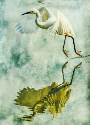 "Wendi Schneider: Egret, Reflected, from ""States of Grace: Fauna: the Aviary"""