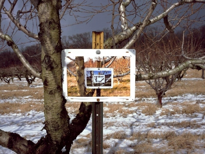 Richard Kent: Brook Lawn Farm Orchard, 4X