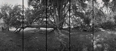 Daniel Lobdell: Arboreal Spaces No. 5