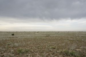 Theo Anderson: Field — Near Hope, New Mexico, from COCA-COLA, the fourth episode and book from the ongoing work, CADILLAC 2007