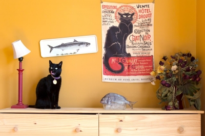 Ileana Hernandez: Le Cats & Le Fish, from the series Animal Nature