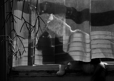 Peter Angelo Simon: Untitled (Window: cat image and shadow) New York City